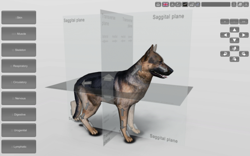 3d dog anatomy software