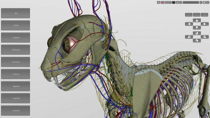 cat anatomy software