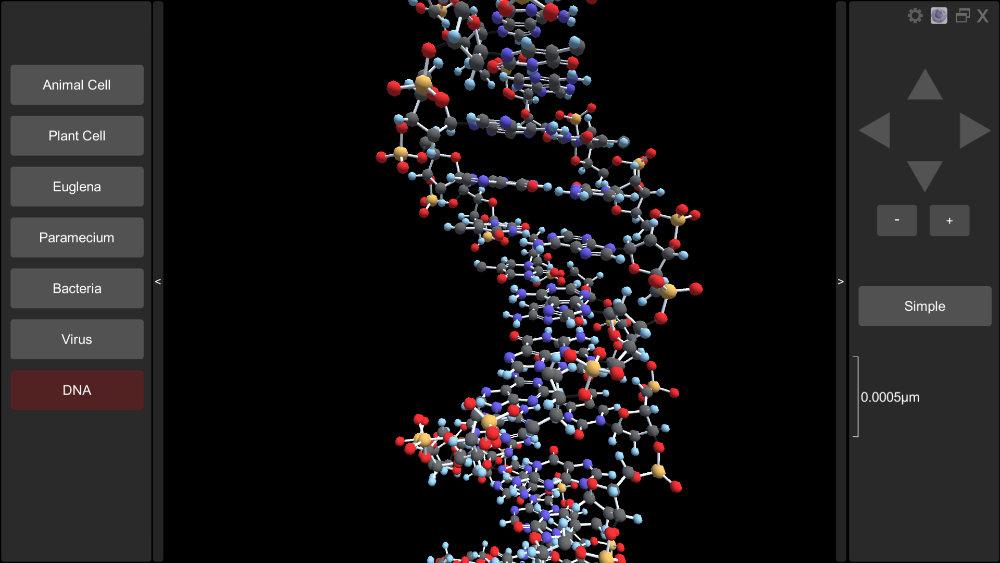 3D DNA molecule