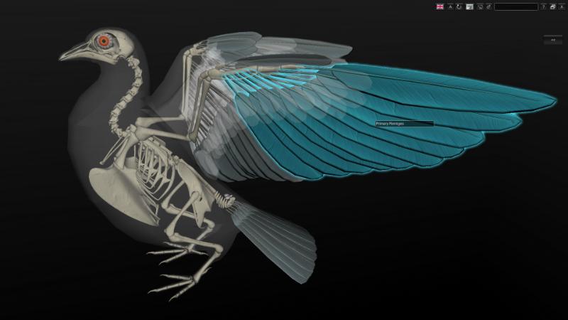 bird anatomy