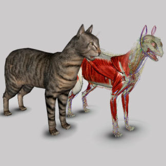 cat anatomy software