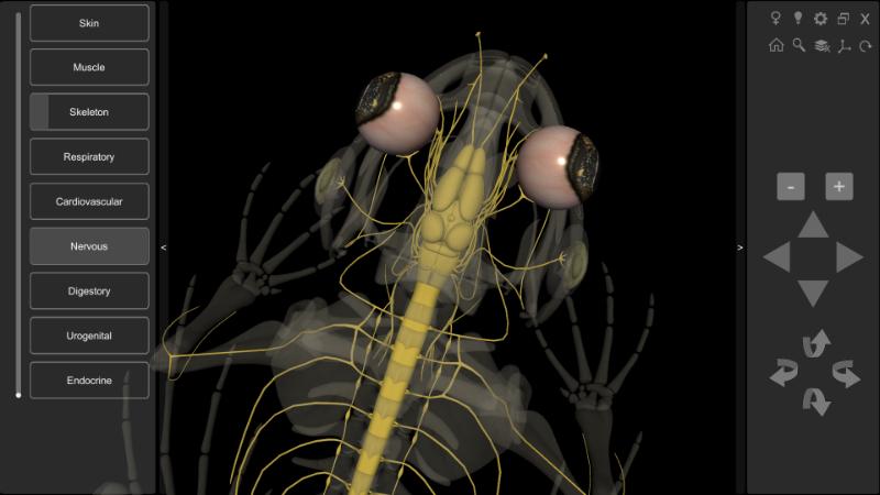 frog nervous system
