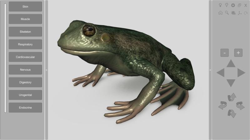 3d Frog Anatomy Biosphera Der obere abschnitt (filum terminale internum) ist ca. 3d frog anatomy