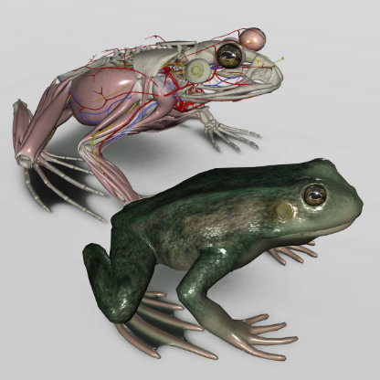 frog anatomy software