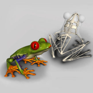 frog skeleton software