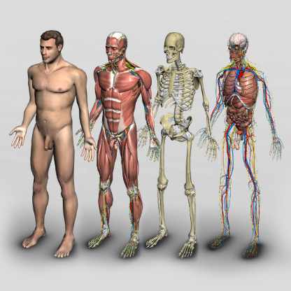 human anatomy software