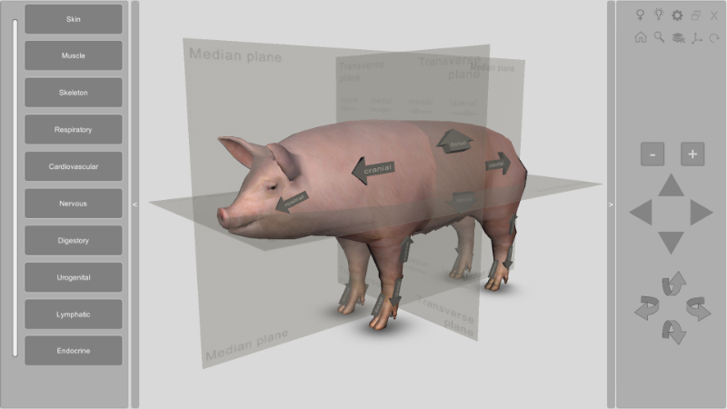 3d pig anatomy software