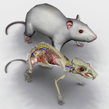 rat anatomy software