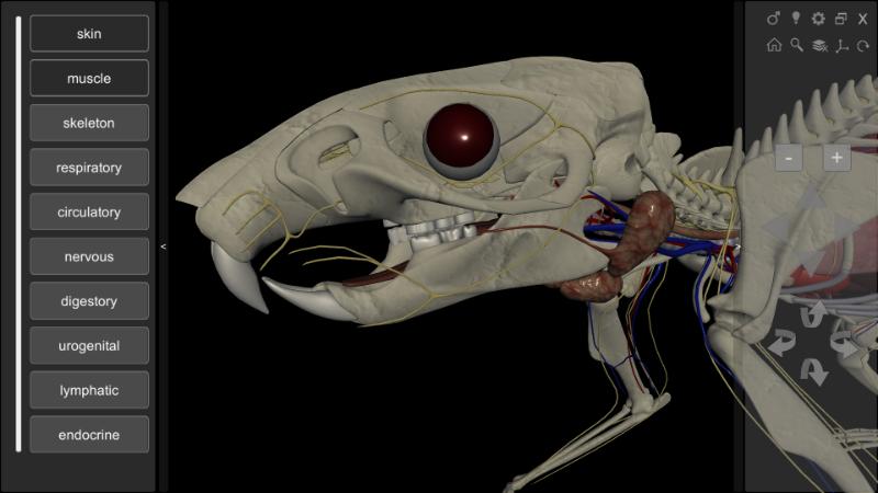 3d rat anatomy software