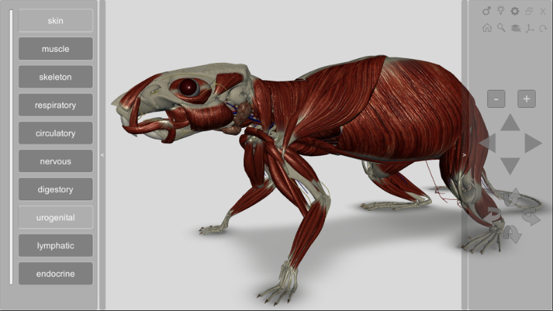 3d rat anatomy software
