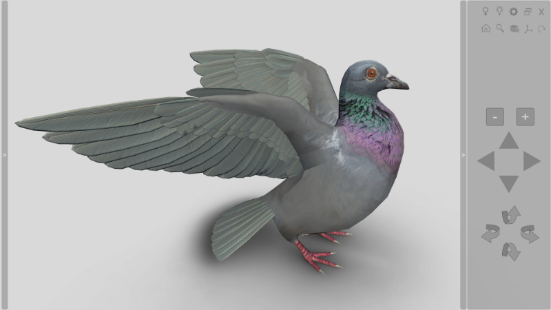 3D bird anatomy software