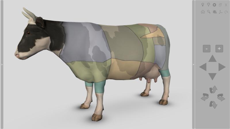 bovine anatomy
