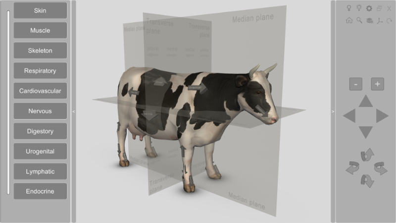 3D Bovine Anatomy software