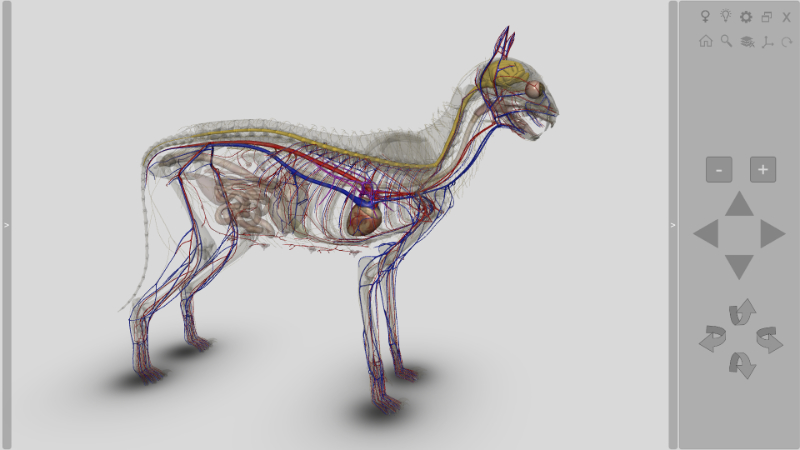 3D Cat Anatomy software