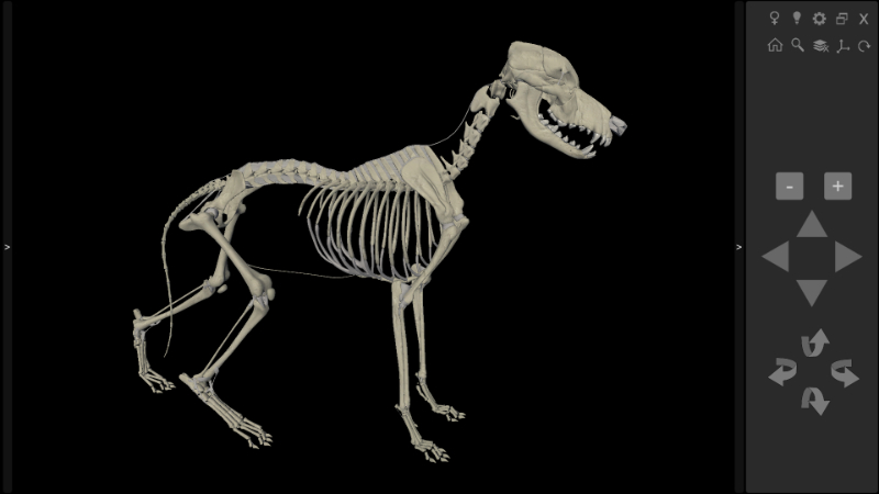 3D Dog Skeleton