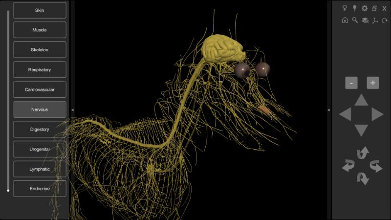 3D Dog Nervous system