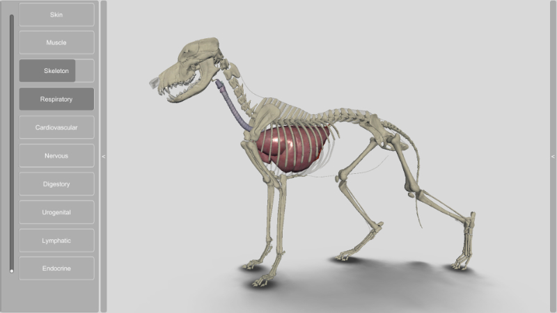 3D dog respiratory system