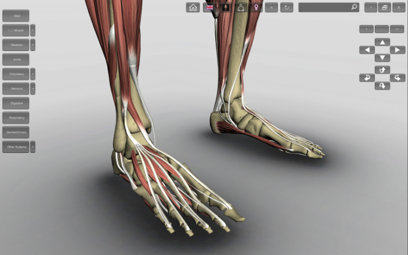 3d feet anatomy