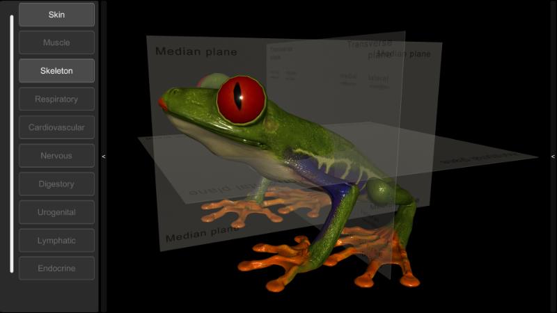 3d frog skeleton
