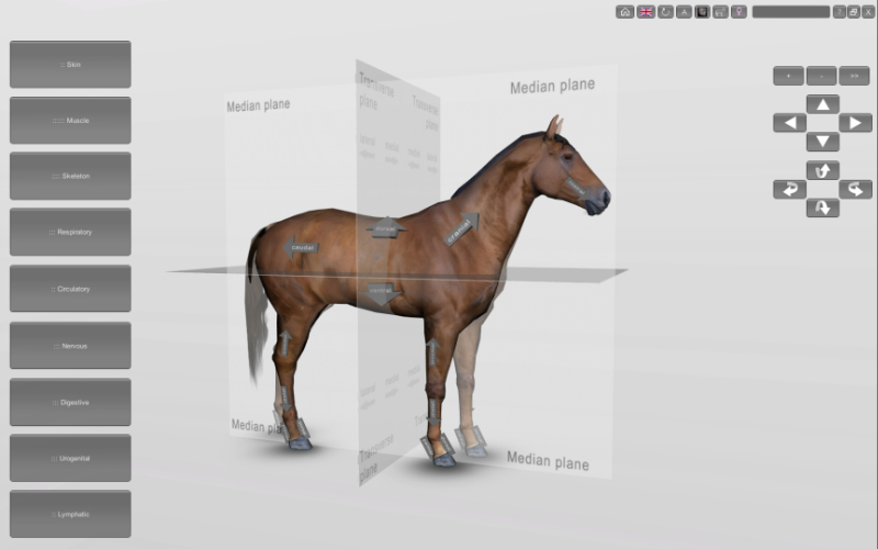 horse anatomical planes