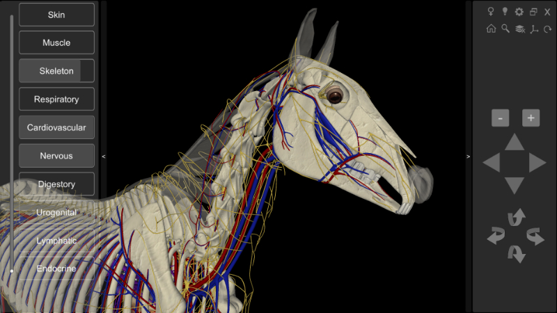 3d horse anatomy - head detail