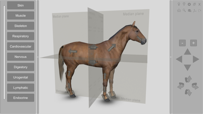 3d horse anatomical planes