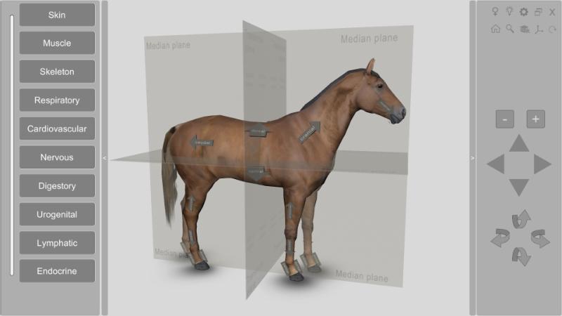 3d horse anatomical planes