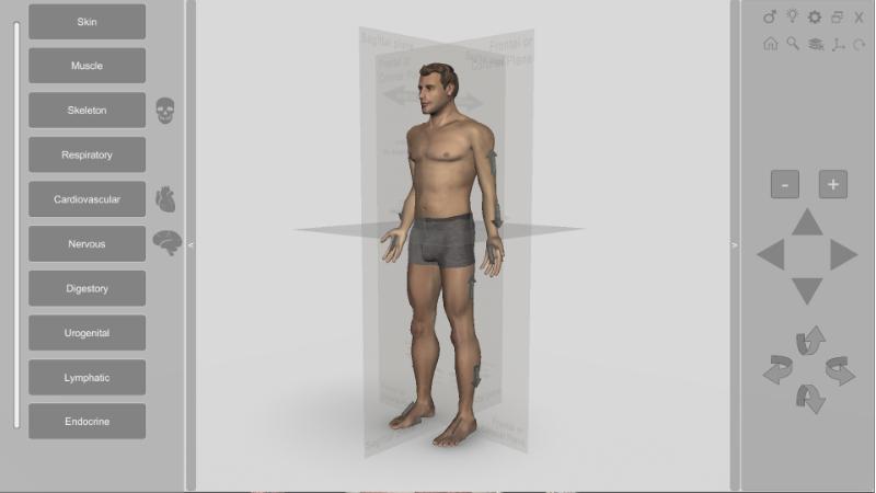 3D Human Anatomy - planes