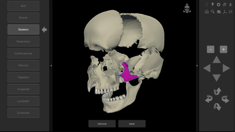 3D Human Anatomy - skull