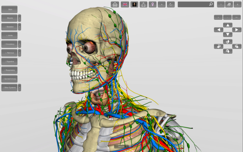 virtual human anatomy
