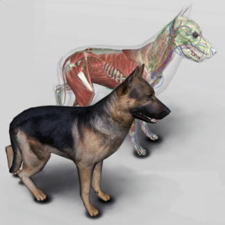 3d dog anatomy software
