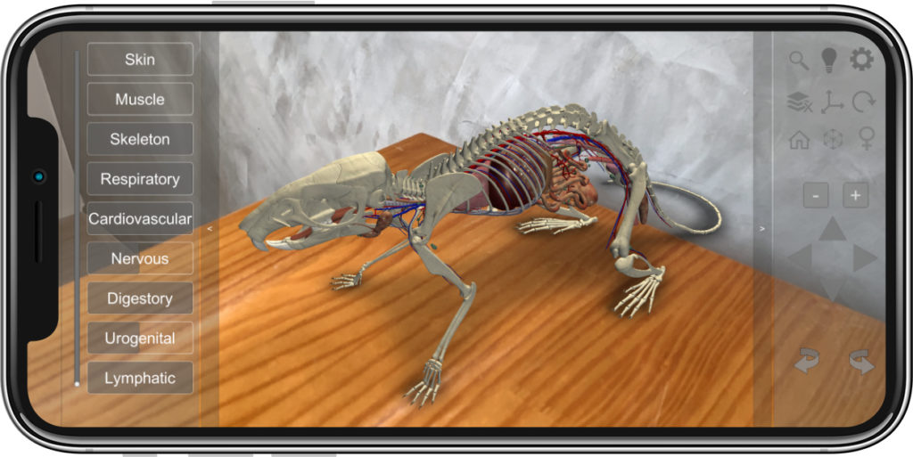 rat augmented reality